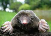 CIT launches National Mole Day Competition