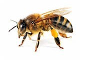 Genetic Diversity in Bees Graduate Internship Programme - Application open