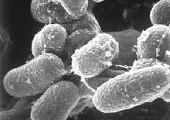 CIT researchers develop new vaccine approach for enteric disease